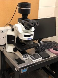 Join us for a FREE Hands-on Workshop on Olympus Light/Fluorescence BX53 microscope (May 13th, 2019)!